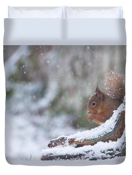 Red Squirrel On Snowy Stump Duvet Cover