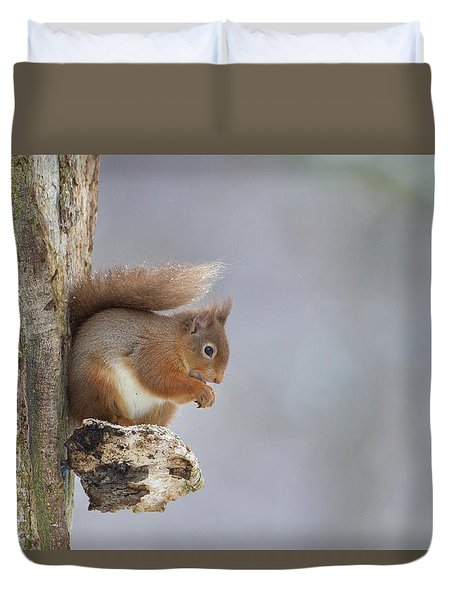 Red Squirrel On Tree Fungus Duvet Cover