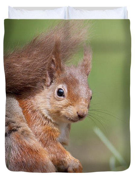 Red Squirrel - Scottish Highlands  #17 Duvet Cover