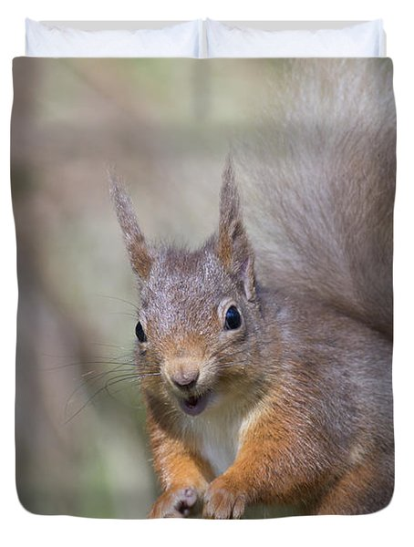 Red Squirrel - Scottish Highlands #26 Duvet Cover