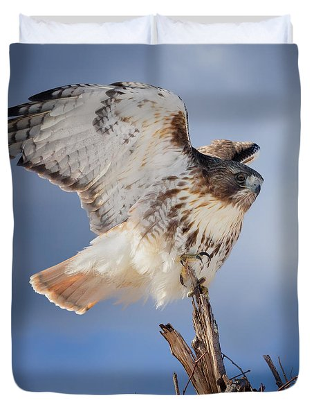 Duvet Cover featuring the photograph Red Tail Hawk Perch by Bill Wakeley