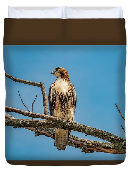 Red Tail Hawk Perched Duvet Cover