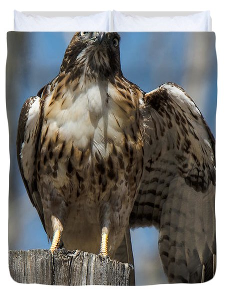 Red-tailed Hawk With Wing Stretch Duvet Cover
