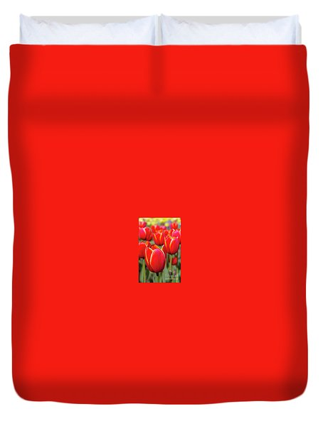 Red And Yellow Tulips I Duvet Cover