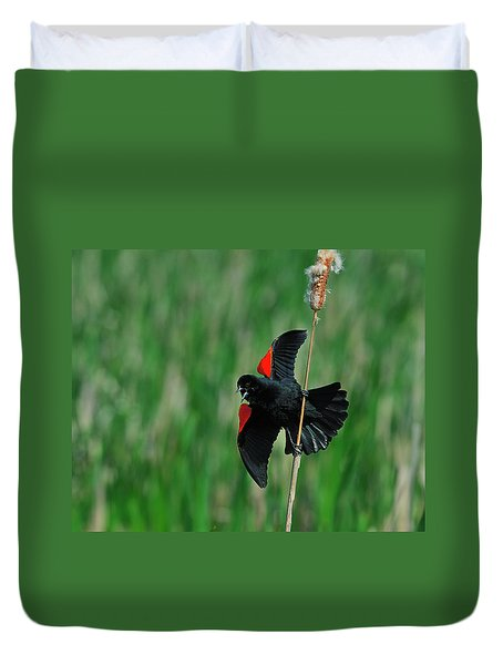Red-winged Blackbird Duvet Cover by Tony Beck