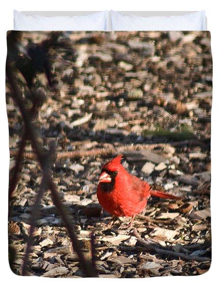 Redbird And American Golden Finch Duvet Cover