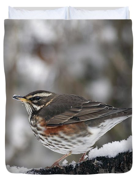 Redwing Perched On A Snowy Branch Duvet Cover