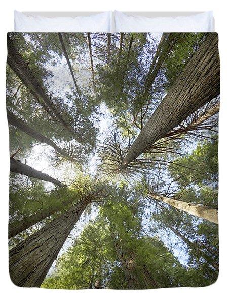 Redwood Towering Giants Duvet Cover