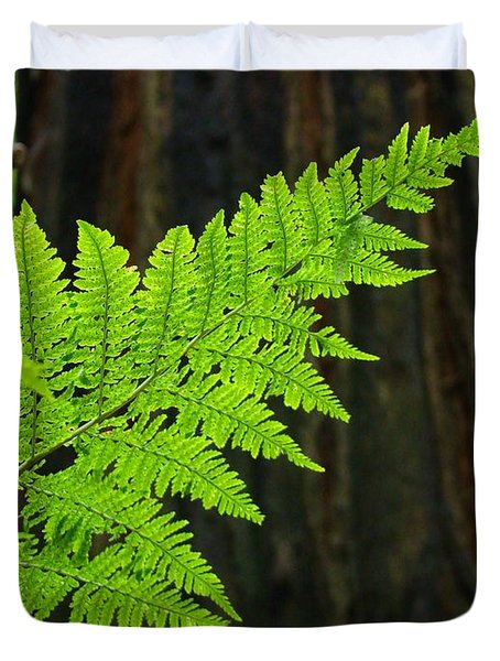 Redwood Tree Forest Ferns Art Prints Giclee Baslee Troutman Duvet Cover by Baslee Troutman
