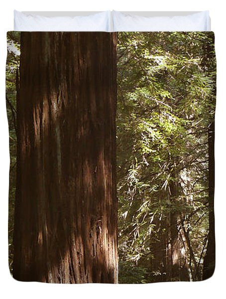 Redwoods Duvet Cover by Mike McGlothlen