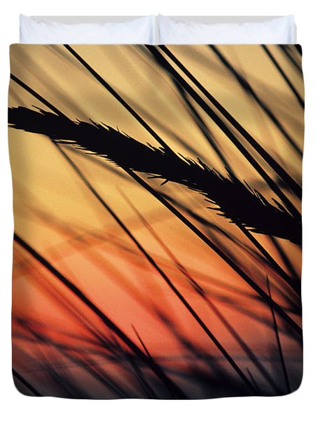 Reeds And Sunset Duvet Cover by Brent Black - Printscapes