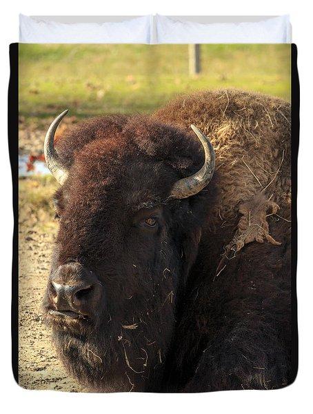 Resting Buffalo Duvet Cover