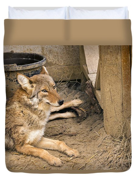 Resting Coyote Duvet Cover