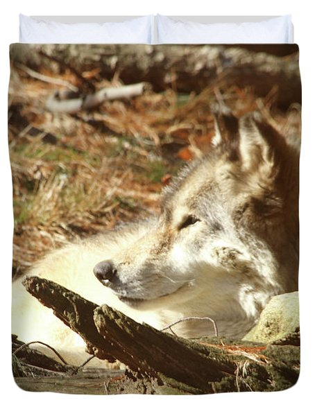 Resting Wolf Duvet Cover by Karol Livote
