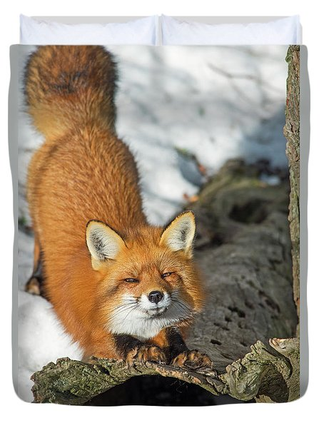 Duvet Cover featuring the photograph Reynard The Fox by Nina Stavlund