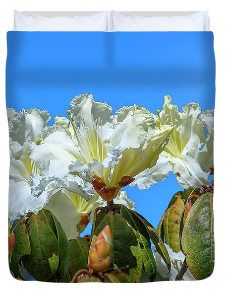 Rhododendron Ciliicalyx Dthn0213 Duvet Cover