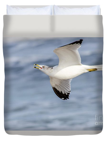 Ring-billed Seagull Looking For Attention Duvet Cover by Debra Martz