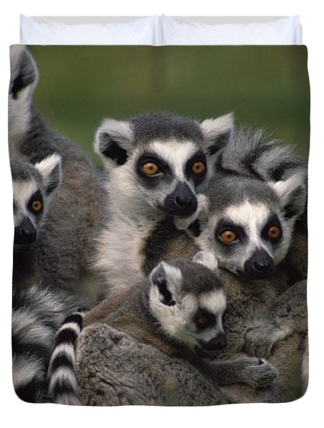 Duvet Cover featuring the photograph Ring-tailed Lemur Lemur Catta Group by Gerry Ellis