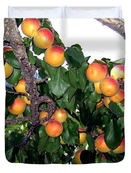 Ripe Apricots Duvet Cover by Will Borden