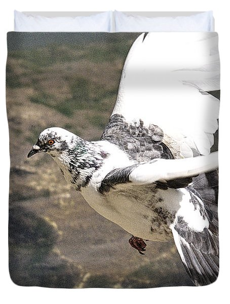 Rock Pigeon In Flight Duvet Cover