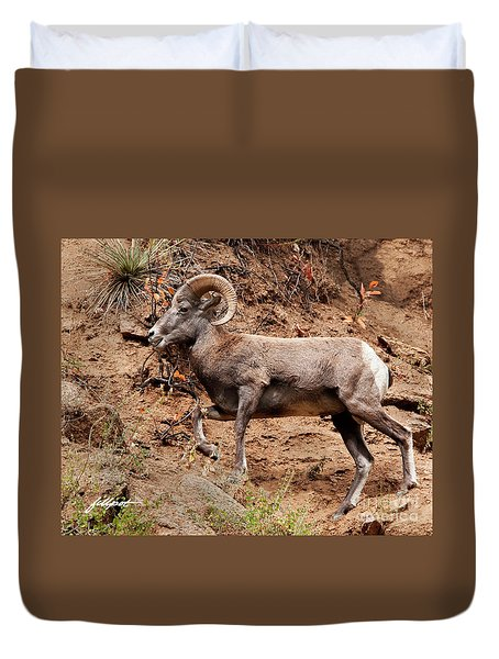 Rocky Mt. Big Horn Sheep Duvet Cover