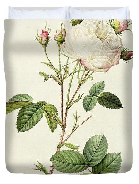 Rosa Centifolia Mutabilis Duvet Cover by Pierre Joseph Redoute