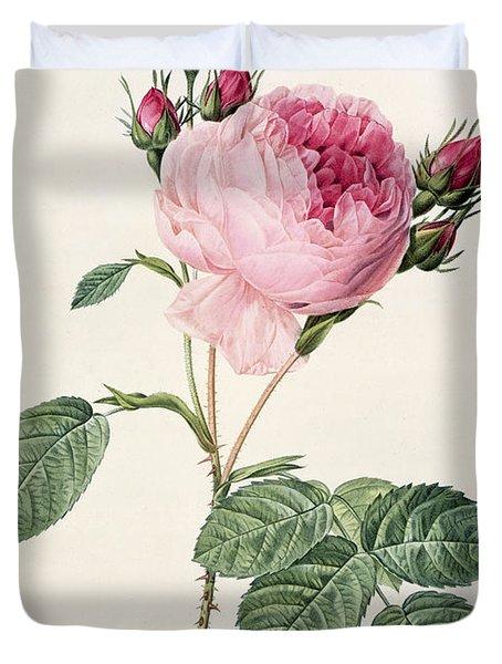 Rosa Centifolia Duvet Cover