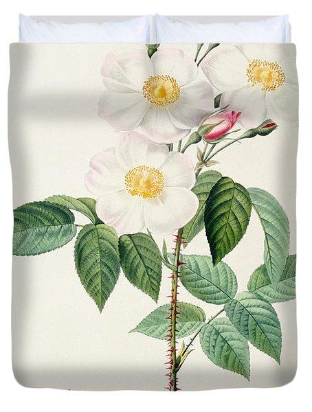 Rosa Damascena Subalba Duvet Cover by Pierre Joseph Redoute