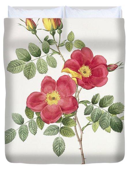 Rosa Eglantera Punicea Duvet Cover