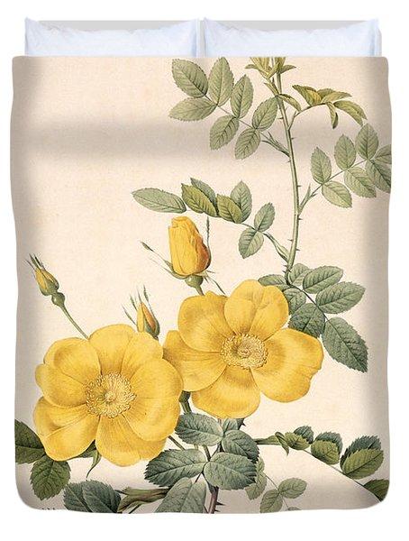 Rosa Eglanteria Duvet Cover by Pierre Joseph Redoute