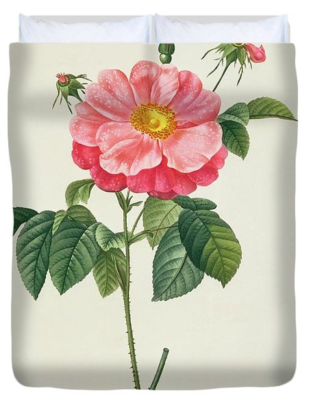 Rosa Gallica Flore Marmoreo Duvet Cover by Pierre Joseph Redoute