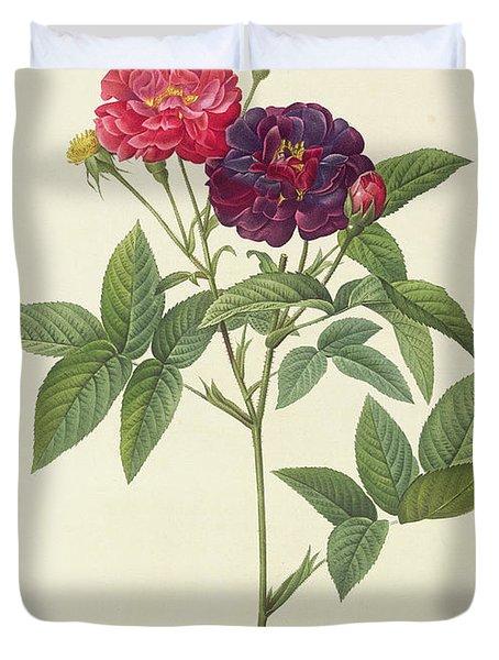 Rosa Gallica Purpurea Velutina Duvet Cover