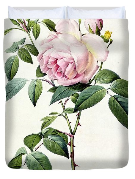 Rosa Indica Fragrans Duvet Cover by Pierre Joseph Redoute