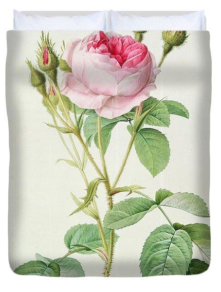 Rosa Muscosa Multiplex Duvet Cover by Pierre Joseph Redoute