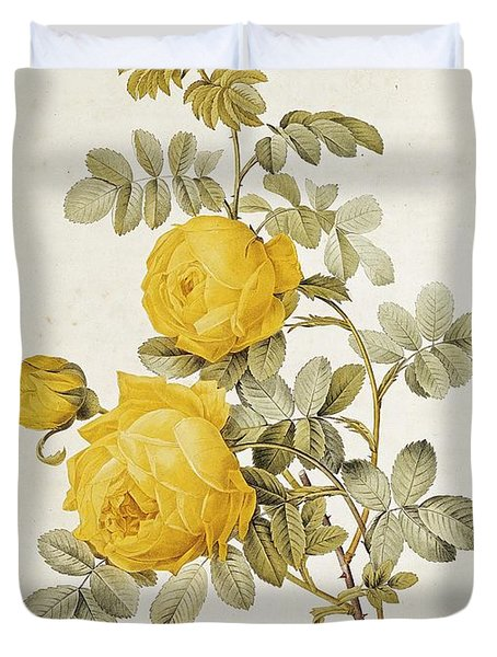 Rosa Sulfurea Duvet Cover by Pierre Redoute