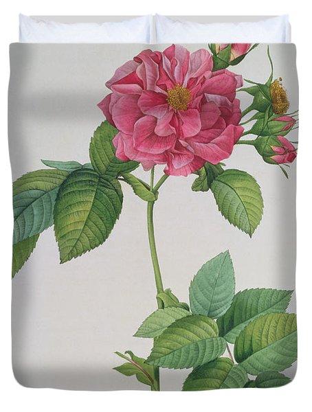 Rosa Turbinata Duvet Cover