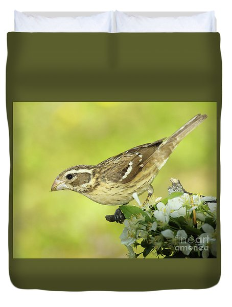 Rose-breasted Grosbeak And Apple Blossoms Duvet Cover