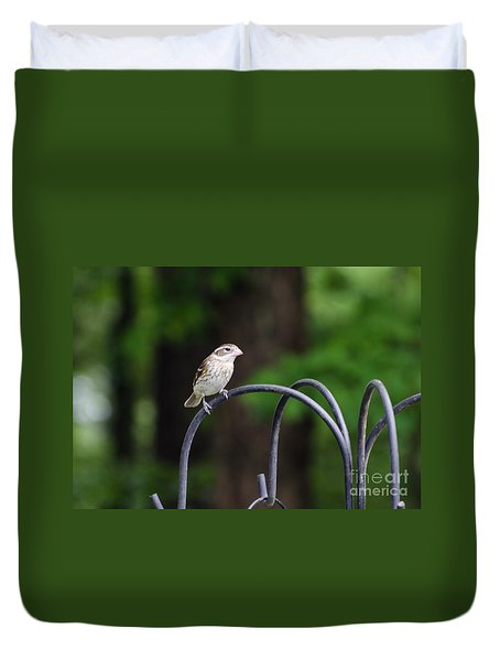 Duvet Cover featuring the photograph Rose Breasted Grosbeak Female by Donna Brown