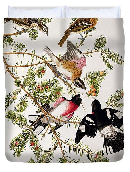 Rose Breasted Grosbeak Duvet Cover by John James Audubon