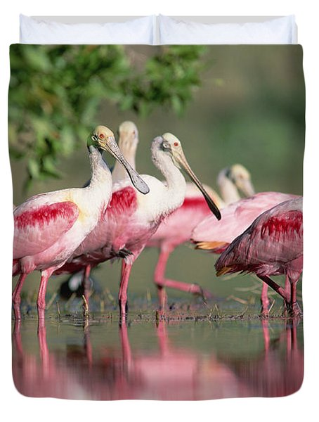 Duvet Cover featuring the photograph Roseate Spoonbill Flock Wading In Pond by Tim Fitzharris