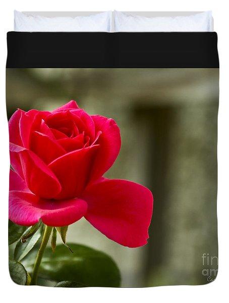 Red Rose Wall Art Print Duvet Cover by Carol F Austin
