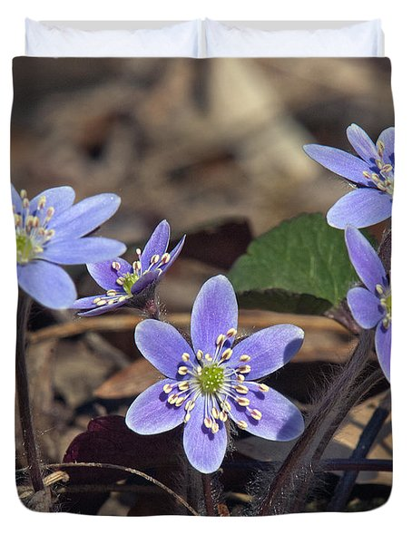 Round-lobed Hepatica Dspf116 Duvet Cover by Gerry Gantt