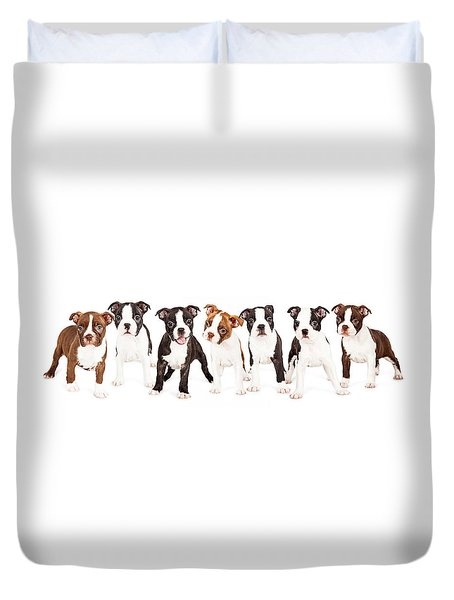 Row Of Boston Terrier Puppies Duvet Cover