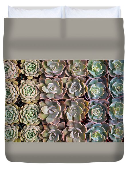 Rows Of Succulents  Duvet Cover by Catherine Lau