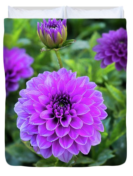 Royal Dahlia Delight Duvet Cover