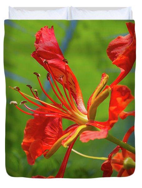 Royal Poinciana Flower Duvet Cover