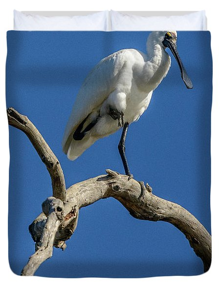 Royal Spoonbill 01 Duvet Cover
