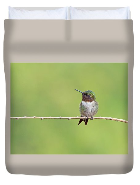 Ruby-throated Hummingbird Male Duvet Cover