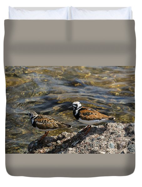 Ruddy Turnstone Duvet Cover