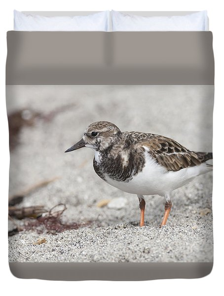 Ruddy Turnstone On The Beach Duvet Cover